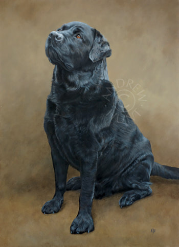 Curtly: Labrador dog portrait painting
