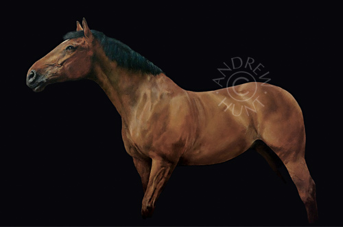 Painting of a horse called Monty - Irish Sport horse