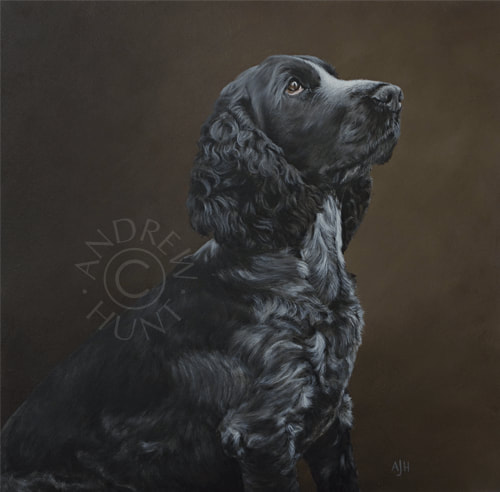 Portrait painting: Blue Roan Cocker Spaniel
